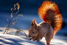 állatok télen fotók