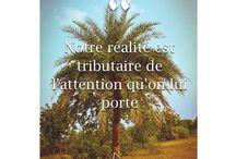 Citations (...) / Des citations et beaucoup d'inspirations !!  Visitez aussi mon site internet : www.pensées-naturelles.com