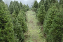 Oh Christmas Tree (Farm) ! / Just some of the other growers who who inspire us to keep on growing !