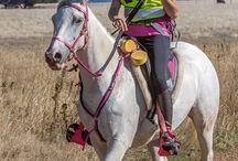 Australian Endurance Riding / Photographs of Australian Endurance riding