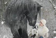 állatok és emberek