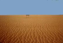 Algerije / één van de eerste dingen waar je bij Algerije aan denkt. Niet zo gek natuurlijk als je bedenkt dat Algerije voor 85% uit woestijn bestaat.