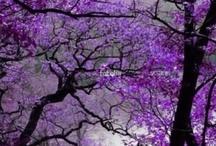 beautiful nature!!!!!!