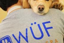 DFW Dogs