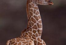 Animals / by Monica Martinez