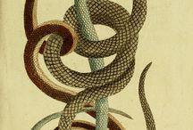 Biologi : Reptiler och en massa drakar