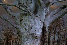 """W moim lesie drzew / """"Choćby jęk"""" W moim lesie drzew Jedno nieme jest Wątłe i wiotkie A kocham je"""