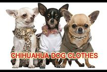 Funny Dog Clothes 2016