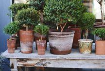 Garden Inspiration / all things garden