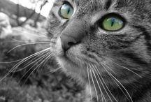 CAT PAWS AND EYES / Pattes et queues de chats symbolisant leur beauté
