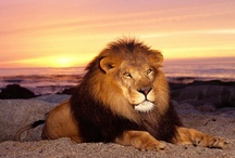 Lions Roar / by Dodie Dee