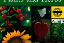 Natural remedies / by Tammy Bloome