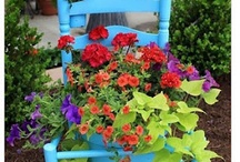 WINDOWBOXES AND CONTAINERS / by Suzenne Connelly