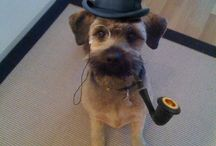 Dogs Wearing Top Hats