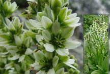 bee's plants-toksike