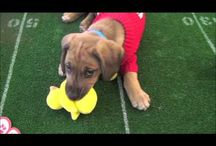 The Puppy Channel / http://www.thepuppychannel.com/ -- relax and watch the puppies.  This is a curated board of the best puppy videos from the Puppy Channel.  / by John Hines