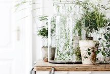 chapter mercantile / a pop-up / Inspiration for Chapter Mercantile, a Pop-Up Lifestyle Shop by Adored Vintage opening in April 2017 in Portland, OR  A vintage shop meets a general store meets a plant shop.