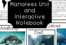 Manatees Unit
