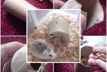 Hamster ♥