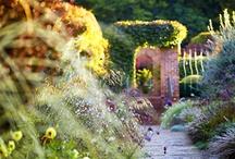 Gartenfotografie | Das GartenKollektiv / by Lars Schoenberg