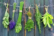 HERBAL REMEDIES / All the way herbs can help us heal and stay healthy naturally.