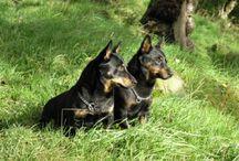 Pets / Lancashire animals