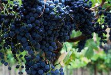 Grapes & Vineyards / by Ale Ordeñana
