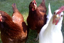 blogs  / http://restlesshens.blogspot.com/