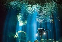 Cenotes Scuba Diving! Amazing! / All the information we can find about scuba diving in the Cenotes along the Riviera Maya!