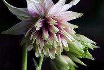 Photo : Flowers