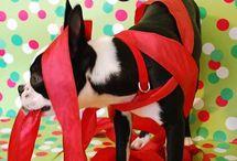 Pet Photography / by Jennifer Schneider