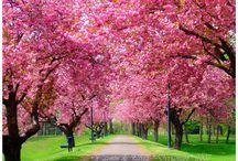 Severe Spring Fever! / by Lindsay Pitt