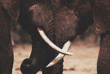 elefantes world