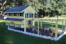 For my Chooks / Backyard Chickens / by Judi Ballantyne