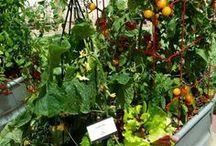 container veggies garden