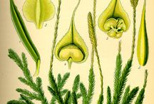 plants- report