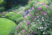 Garden inspo