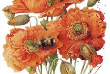 flowersdraw
