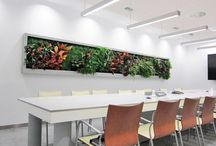 Office Design with Plants in Mind! / Design ideas for offices with plants and living walls  / by Greenery Office Interiors Ltd