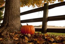 Fall Pics / by Marie