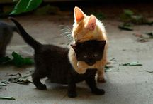 cats / i pin it.. because i love it..