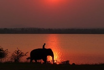 Africia/Safaris / by Terry Miller-Evans