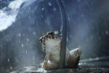 Rane sotto la pioggia