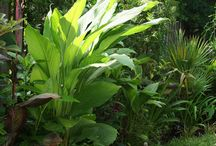 Eddible plants to grow