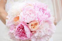 Wedding Bliss / by Pamela G