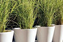 Outdoor Plant Retail / Visit Flourish, Manchester for a wide variety of garden plants