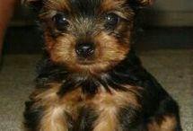 Pups / Doggies