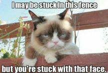 Bobs Grumpy Cat / Grumpy Cat