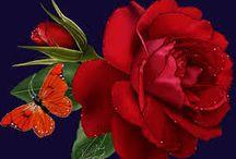 Růže barevné :)