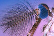 Microscopic / by Valerie Pettit